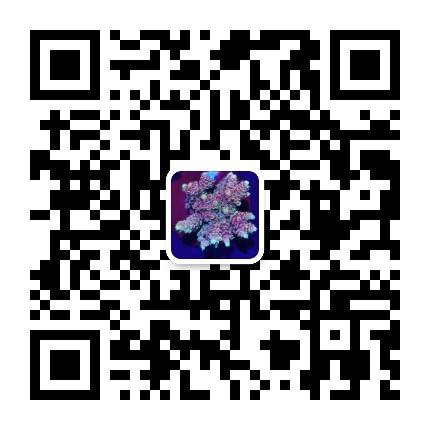 Wechat id small
