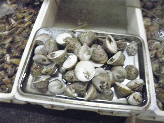 海鲜市场3