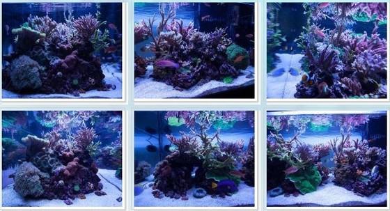 2012年11月RC 每月一缸Michael Panganiban的SPS缸| 海水驿站
