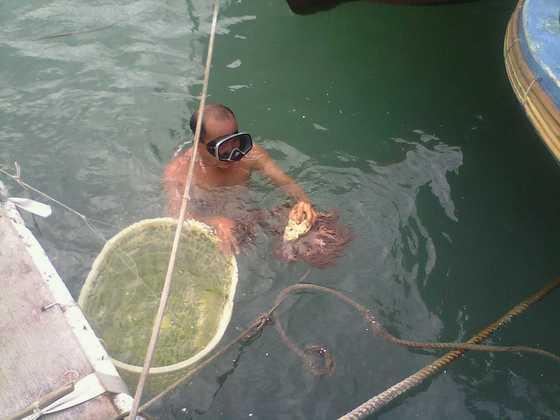 渔民潜水捞珊瑚1