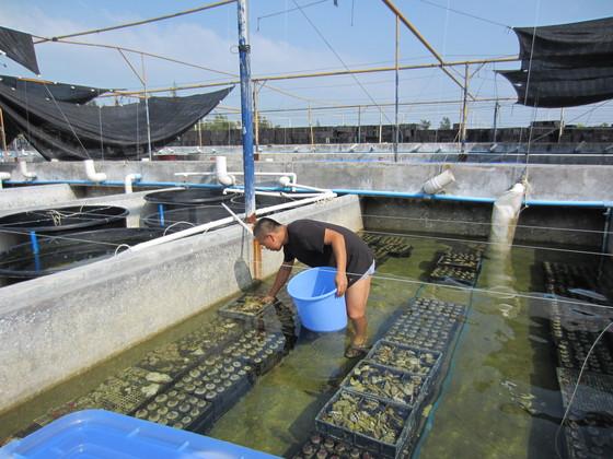 珊瑚繁殖水体