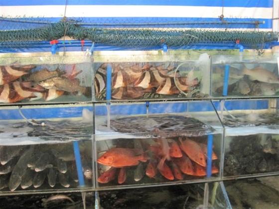 海鲜市场4