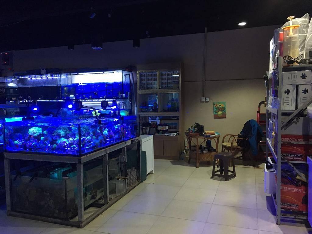 北京蓝洋水族